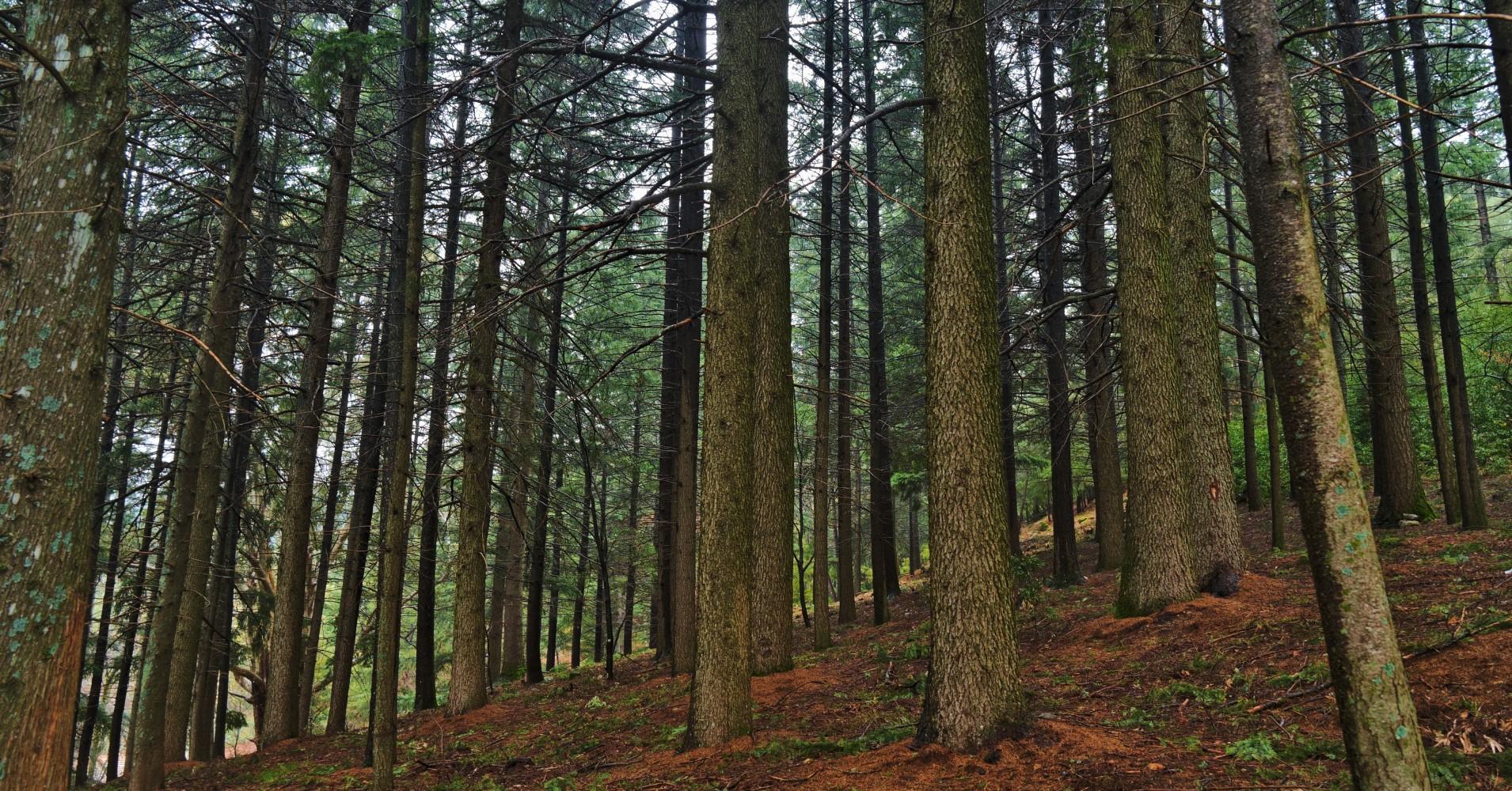 Parque florestal da Covilhã